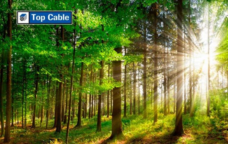 Top Cable usa bobinas de madera sostenible