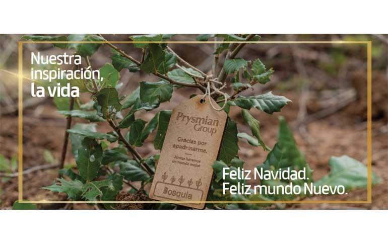 Prysmian Group apadrina la reforestación de dos bosques