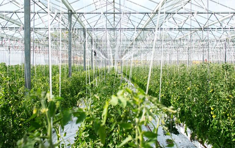 Ayudas para las Energías Renovables en el sector agropecuario y de regadío